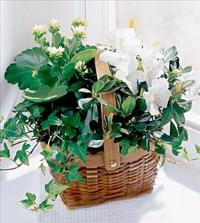 The FTD® White Assortment Basket by Suinshine Florist