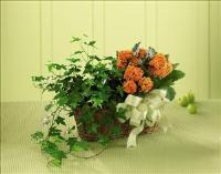 The FTD® Kalanchoe & Ivy Planter by Suinshine Florist
