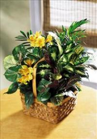 A Bit Of Sunshine™ Basket by Suinshine Florist