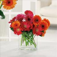 Charming Gerberas by Suinshine Florist