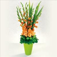 Glorious Gladiolus by Suinshine Florist