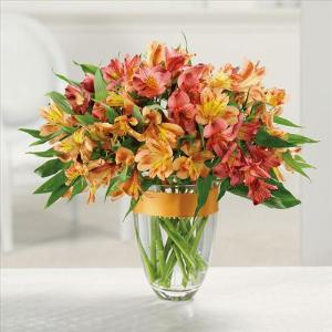 Awesome Alstroemeria by Suinshine Florist