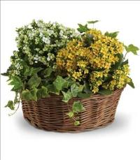 Basket of Joy by Suinshine Florist