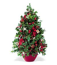 Boxwood Tree by Suinshine Florist