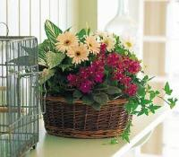 Medium European Basket by Suinshine Florist