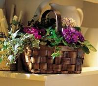 Mixed African Violet Basket by Suinshine Florist