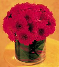 Red Gerbera Mound by Suinshine Florist