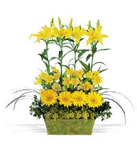 Yellow Garden Rows by Suinshine Florist