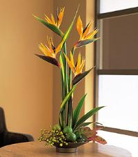 Birds of Paradise by Suinshine Florist