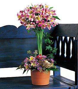 Alstroemeria Topiary by Suinshine Florist