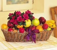 Fruit with Plant by Suinshine Florist